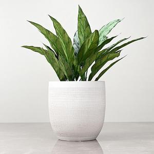 Medium Cream Ceramic Modern Vase