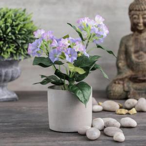 Petunia in Cement Pot