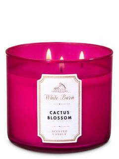 Cactus Blossom 3-Wick Candle