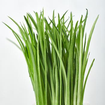 Green Water Grass