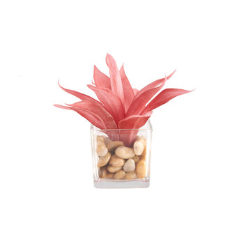 Red Agave in Glass Pot