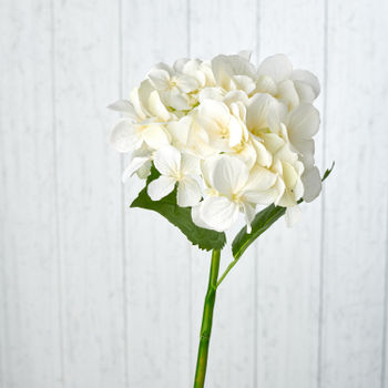 Cream Hydrangea Single Spray
