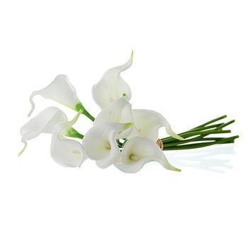 CALLA, White