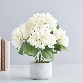 Potted White Hydrangea