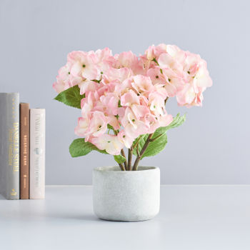 Potted Pink Mini Hydrangea
