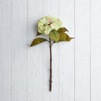 Green Single Stem Hydrangea Flower