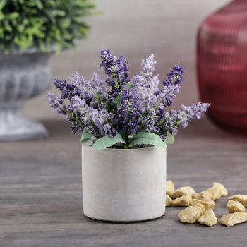 Set of 2 Lavender in Cement Pot