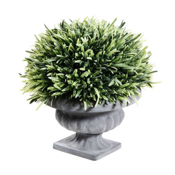 Potted Rosemary Topiary