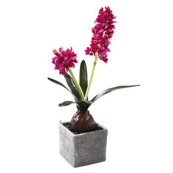 Potted Fuchsia Hyacinth
