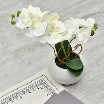 Set Of 2: Potted White Orchid Arrangement
