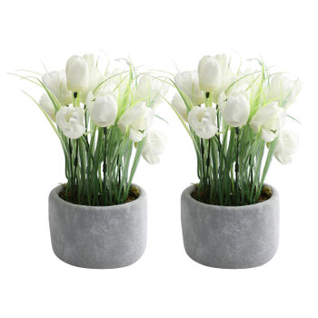Set Of 2: Potted White Tulips