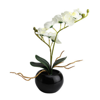 Set Of 2: Potted Small White Orchid Arrangement
