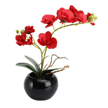 Set Of 2: Potted Small Red Orchid Arrangement