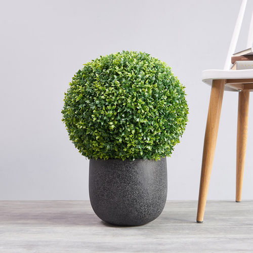 Medium Sea grass Ball Topiary