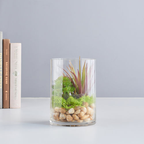 Green Mixed Succulent in Small Glass Bottle