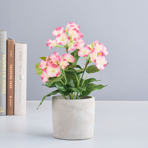 Potted Pink Petunia