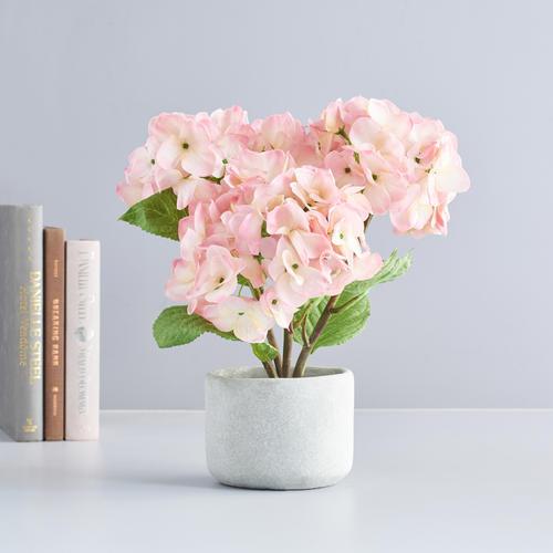 Potted Pink Mini Hydrangea