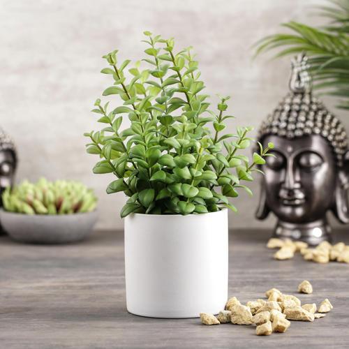 Apple Leaves in Ceramic Pot