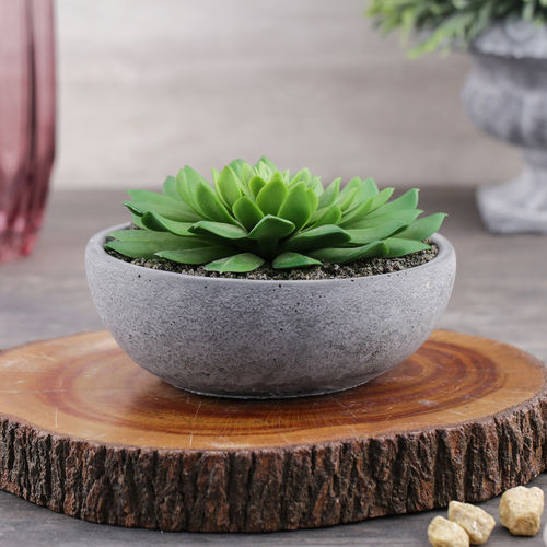 Succulent in Cement Pot