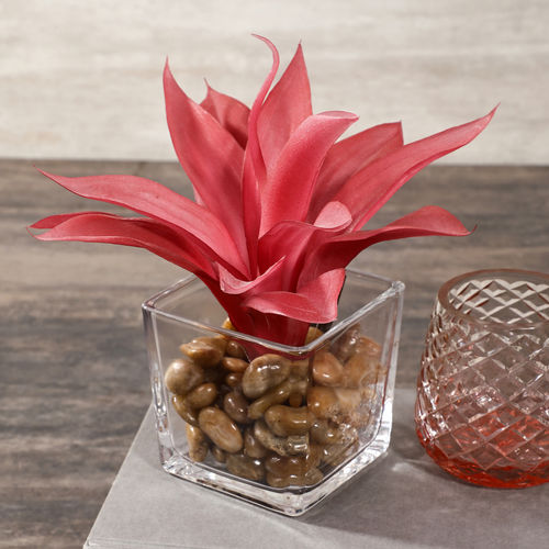 Red Agave In Vase With Pebbles