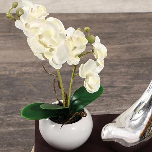 Potted White Phalaenopsis