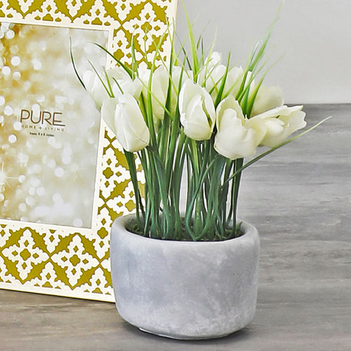 Set of 2 : Potted White Tulip